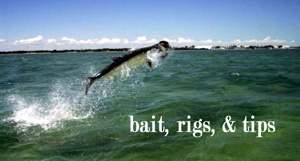 Discount_Tackle_Outlet_Bait_Rigs_Tips