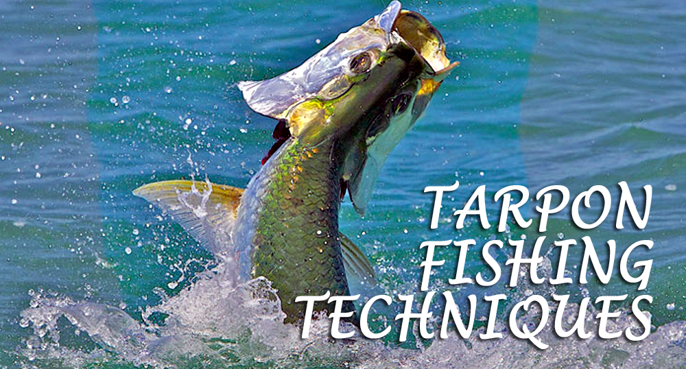 Discount_Tackle_Outlet_TARPON_Fishing_Tips